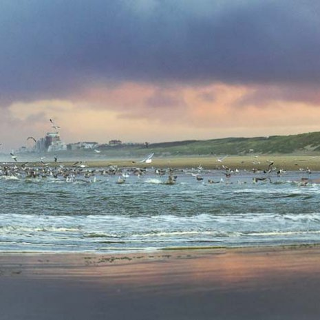 Strandleven Panorama 21