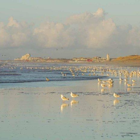 Strandleven Panorama 27